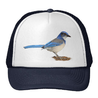 JAY 1 TRUCKER HAT