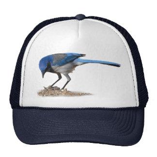 JAY 4 HATS