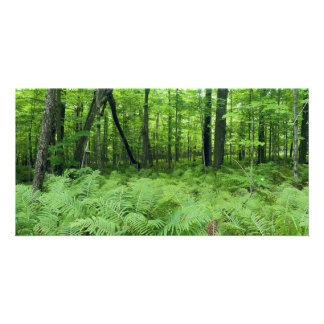 Jay Cooke State Park Ferns and Forest Card