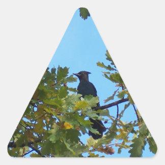 Jay de Steller en roble Pegatina Triangular