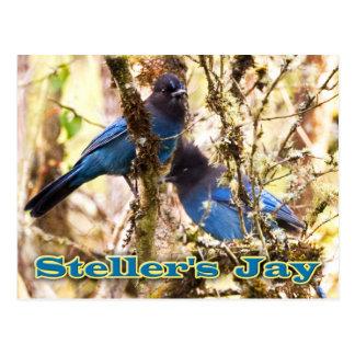 Jay de Steller Postal