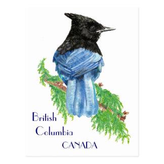 Jay estelar, Columbia Británica, pájaro, naturalez Tarjetas Postales