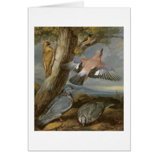 Jay, Green Woodpecker, Pigeons and Redstart, c.165 Greeting Cards