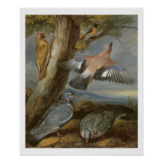 Jay, Green Woodpecker, Pigeons and Redstart, c.165 Poster