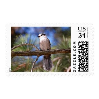 Jay gris en una rama sello postal