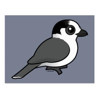 Jay gris postales