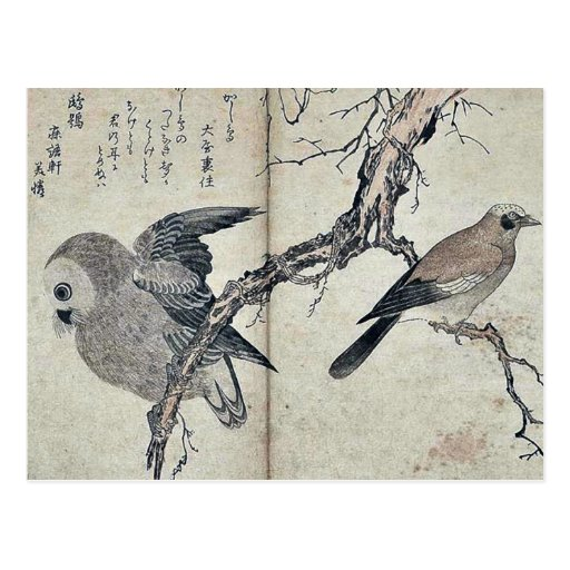 Jay y búho por Kitagawa, Utamaro Ukiyoe Postal