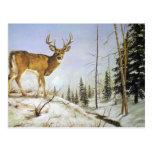 Jay's Peak, White Tail Deer Postcard