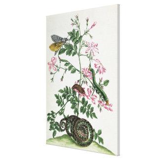 Jazmín: con la serpiente, la polilla, el caterpill impresiones en lienzo estiradas