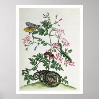 Jazmín: con la serpiente, la polilla, el caterpill póster