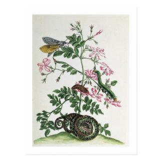 Jazmín: con la serpiente, la polilla, el caterpill tarjeta postal