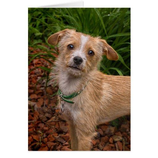 Jazmín del perro del rescate de la mezcla de tarjeta de felicitación