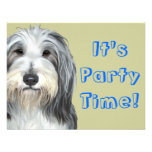 Jazz, the Bearded Collie Announcements