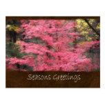 Jean Autumn Leaves 6 Seasons Greetings Postcards