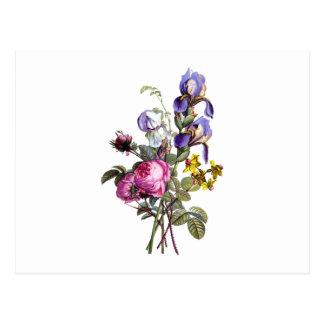 Jean Louis Prevost Cabbage Rose and Iris Bouquet Postcard