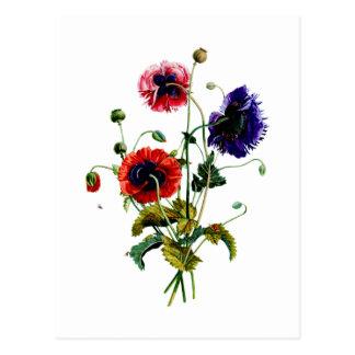 Jean Louis Prevost Mixed Poppy Bouquet Postcard