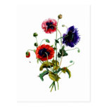 Jean Louis Prevost Mixed Poppy Bouquet Postcards