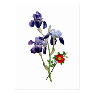 Jean Louis Prevost Purple Iris Bouquet Postcard