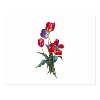 Jean Louis Prevost Red & Blue Tulip Bouquet Postcard