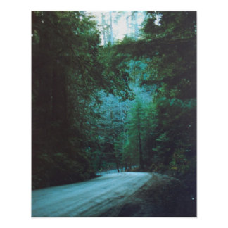 Jedediah Smith Redwoods State Park, CA Poster