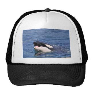 Jefe del asesino de la ballena gorro de camionero