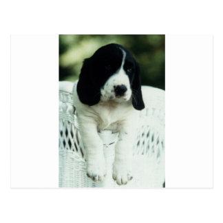 Jefferson perro del diseñador del afloramiento/de postal