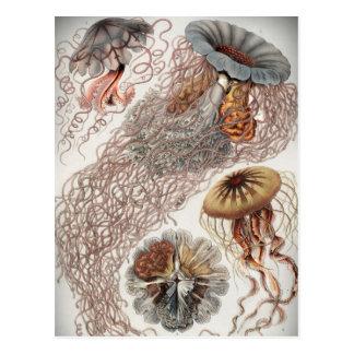 Jellies (jellyfish) in pastel colors postcard