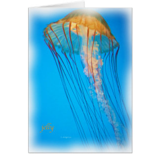 jelly_2643_Paint Card