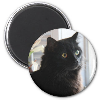 Jelly Bean, the black licorice cat, magnet