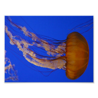 Jelly Fish at Big Sur Poster