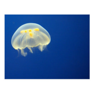 Jelly Fish, Blue Water Postcard