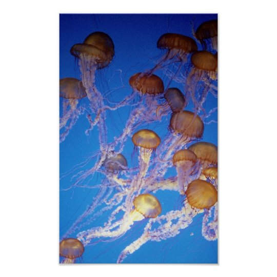 Jelly Fish Bunch poster