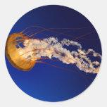 Jelly fish classic round sticker