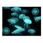 jelly fish glowing postcard