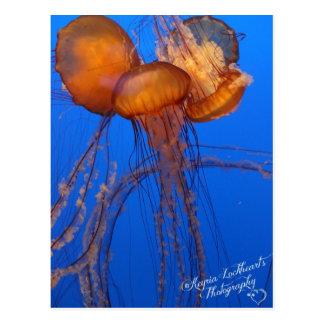 Jelly Fish Postcard