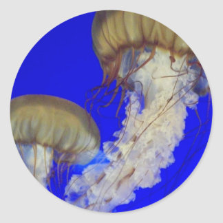 jelly fish  sticker