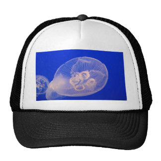 jelly fish trucker hat