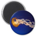 Jellyfish 2 Inch Round Magnet
