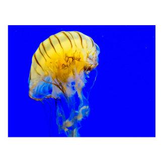 jellyfish-386680 BRIGHT ROYAL BLUE YELLOW COLORFUL Postcard
