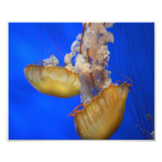 "Jellyfish 8""x10"" Photo Print"