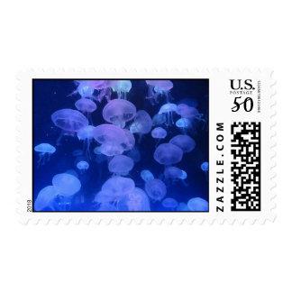 Jellyfish at Florida Aquarium Tampa Florida Postage