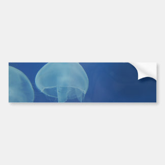 jellyfish car bumper sticker