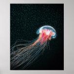 Jellyfish deep sea creature illustration print