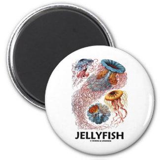 Jellyfish (Ernest Haeckel's Artforms Of Nature) 2 Inch Round Magnet