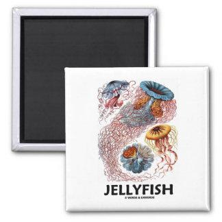 Jellyfish (Ernest Haeckel's Artforms Of Nature) 2 Inch Square Magnet