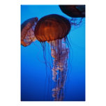 Jellyfish I Print