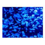 Jellyfish in Deep Blue Sea Postcard