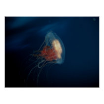 Jellyfish in the Ocean Poster
