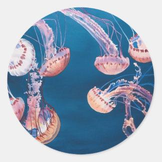 Jellyfish Jam by Paul Jackson, aws, nws Classic Round Sticker