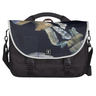 Jellyfish Bags For Laptop
